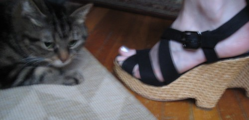 04-14 cat and shoe
