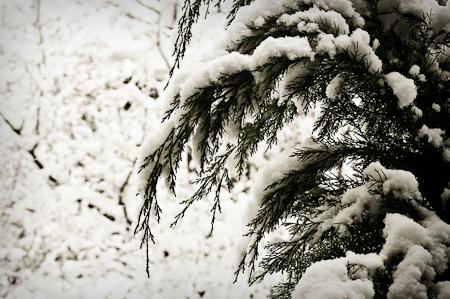 Snow_Storm-2