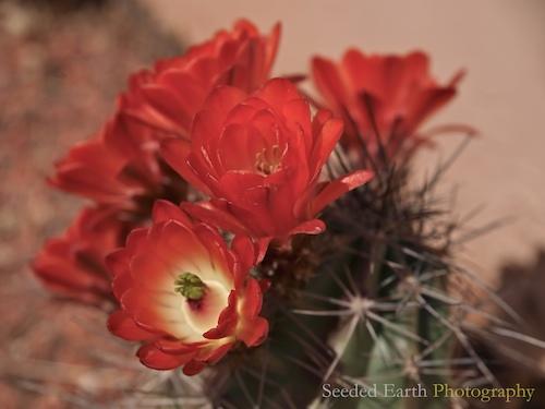 407. Cactus