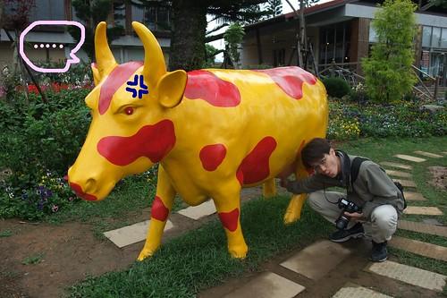 紅色的乳牛,擠出來是草莓牛奶?