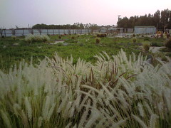 صورة0032 (lateefkuwait) Tags: في تاريخ المزرعة 452009