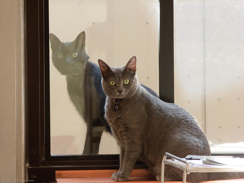 How much for the kittens in the window?