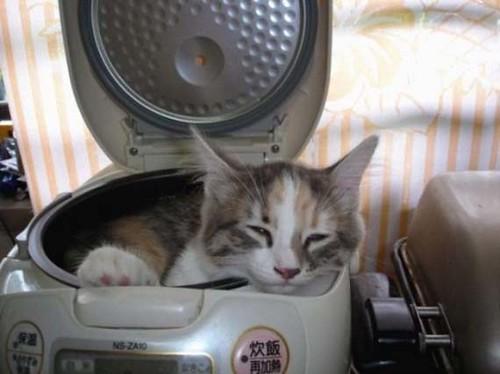 cat_14