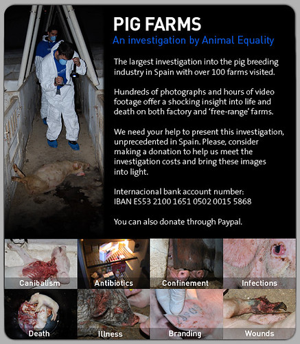 Igualdad Animal (Animal Equality) - Spanish Pig Farm Investigation