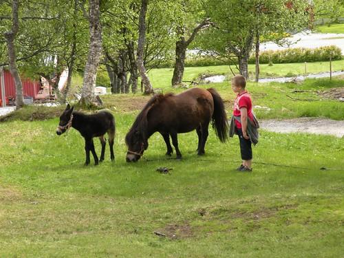 the little mule is so shy