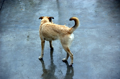 Free but Lost (Jsome1) Tags: dog co rain lost chuva free but perdido astoundingimage