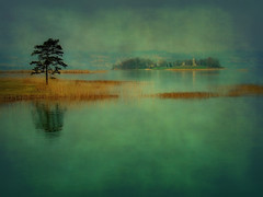 All around me... (ceca67) Tags: morning blue lake reflection tree texture nature water grass island switzerland spring underwater gelb mysterious rapperswil ceca anawesomeshot visiongroup infinestyle bratanesque citrit memoriesbook artistictreasurechest miasbest capturethefinest serbianphotographers daarklands ashowoff magicunicornverybest robertsartgallery