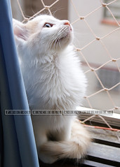Axl (Rachell Kolodsiejski) Tags: natureza gatos felinos animais gatinhos pelos animaisdeestimao cmerasonydslra300 fotgrafarachellkolodsiejski gatosdeapartamento