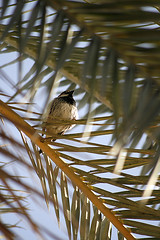 Bird (Azaga ) Tags: light sun black bird libya   sebha ibrahem ghademes azaga