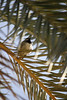 Bird (Azaga ツ) Tags: light sun black bird libya صحراء ليبيا sebha ibrahem ghademes azaga