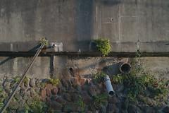 (M6 Panda) Tags: public digital iso100 raw 28mm sigma osaka foveon dp1 sigmaphotopro