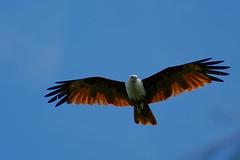 350E0770 (Zoemies...) Tags: beach birds balikpapan lamaru zoemies