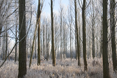 Winter Noord AA Netherlands (Frans Hofstede) Tags: trees winter holland nature netherlands dutch forest landscape fourseasons zoetermeer landschap d90 hollandslandschap noordaa fineartphotos nikond90 onlyyourbestshots funfanphotos naturescreations nikond90club franshofstede ©franshofstede hollandfotoart hollandfotoartnl