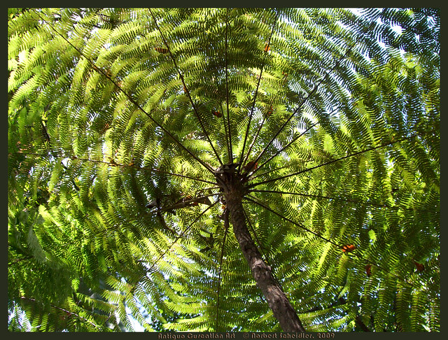 Jardin bot nico la laguna el salvador for Plantas de un jardin botanico
