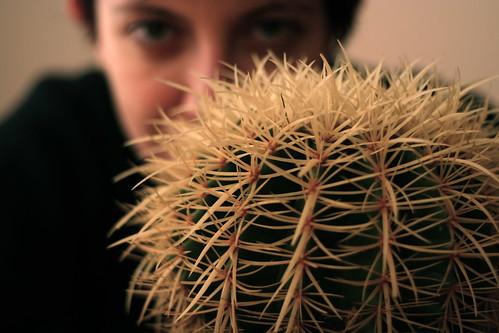 Teste di cactus
