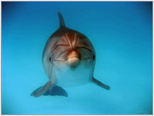 Girl dolphine Omega