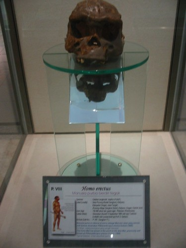 Wereldberoemde Java-Man in het Geology Museum