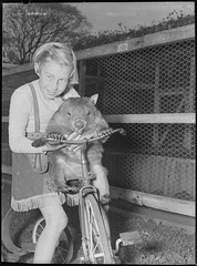 Cary Bay Zoo, Lake Macquarie, NSW, 1954 / Sam Hood (State Library of New South Wales collection) Tags: wombat tricycle vombatusursinus blackandwhite girl cowgirl fringe friends statelibraryofnewsouthwales bike 1954 zoo animal pet happychild cary bay australia lakemacquarie nsw newsouthwales carybaynswaustralia samhood smile
