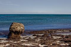 Algas en la playa (ibzsierra junior) Tags: sea seaweed beach water canon mar sand agua playa arena ibiza es eivissa aigua alga platja baleares cavallet topshots worldwidelandscapes natureselegantshots yourcountry 1000d panoramafotogrfico