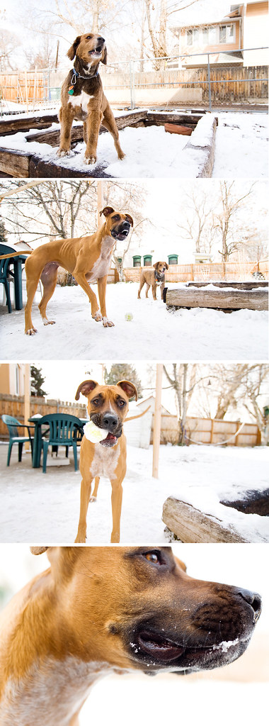 Kerby & Maude's doggy play date
