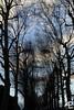 Sérénité / Serenity (Alain Pré) Tags: portrait tree art nature topf25 girl photoshop eyes topc50 dream manipulation 100v10f yeux pre serenity alp fille arbre rêve sérénité proudshopper artisawoman
