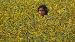 In a mustard field
