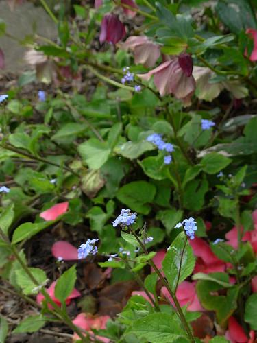 garden 2009 008