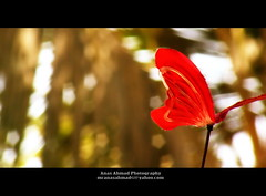 Couldn't Find The Real One (Anas Ahmad) Tags: red butterfly north creative ahmad karachi ahmed anas mywinners colourartaward anasahmad anasahmadphotography