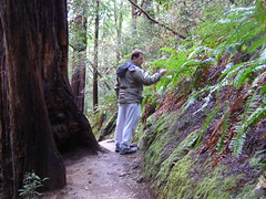 Muir Woods National Forest (elisabethp) Tags: california woods san francisco redwood sequoia nuir