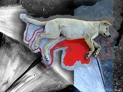 El derecho de vivir  /  Navegar_nadar feliz (Felipe Smides) Tags: chile street santiago dog color art love dogs colors animal animals painting happy amigo calle blood barco peace arte amor interior union paz colores perro sueños nadar perros animales feliz ser navegar felipe sangre vivo amar pinturas callejero compartir descansa vivir manchas artisticexpression disfrutar igualdad desahogo instantfave mywinners abigfave aplusphoto salidad beatifulcapture colourartaward colorartaward artlegacy smides pinturasmides pinturassmides felipesmides