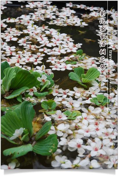 桐花祭賞花步道-挑水古道賞桐花