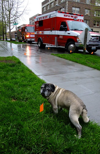 Pug and Ambulance