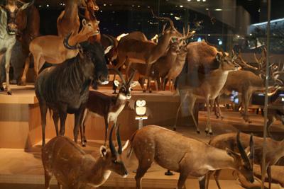 mammals in savanna