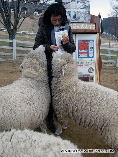 Feeding the giant walking wool balls