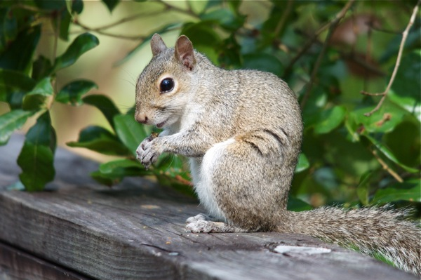 squirrel_profile_0020