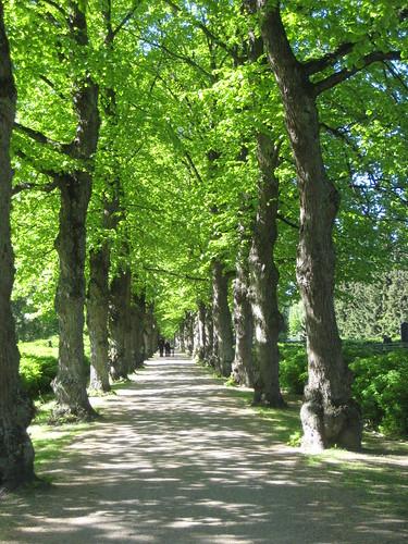 Puistokäytävä by Anna Amnell