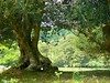 Tree (Tasmin_Bahia) Tags: light summer england sky plants tree green nature beautiful grass leaves sunshine yellow outside outdoors weeds pretty peace hole branches peaceful sunny simple thenewforest