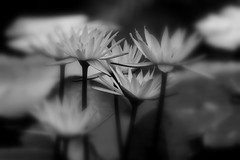 The World's End (Ally Newbold) Tags: life flowers bw white black slr beach nature digital canon allison lens photography rebel living focus florida live killa mm tones vero 75300 xti