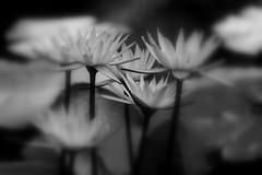 The World's End (Ally Newbold) Tags: life flowers bw white black slr beach nature digital canon allison lens photography rebel living focus florida live killa mm tones vero 75300 xti