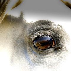 S H A R P . E Y E (T A Y S E R) Tags: eye nikon kuwait tayseer alhamad tayseeralhamad