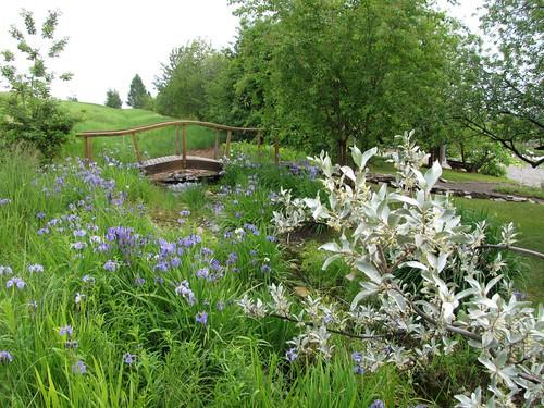 Georgeson Botanical Garden-21