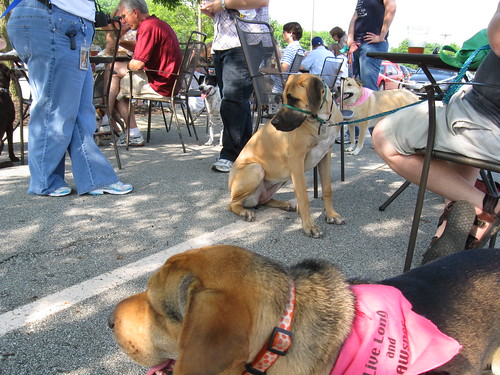 HSI's Yappy Hour