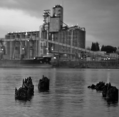 piling (thespeak) Tags: water oregon zeiss river portland dof bokeh hasselblad pdx piling willamette selective autaut