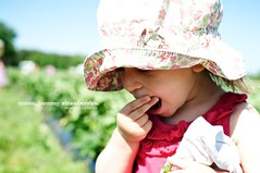The delight of strawberries... (dbalyoz) Tags: nc strawberry berries eating country phoebe picking