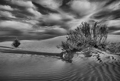 Still Life (Eye of the Storm Photography) Tags: newmexico sand whitesands dunes nationalmonument wonderworld photographyrocks bestcapturesaoi