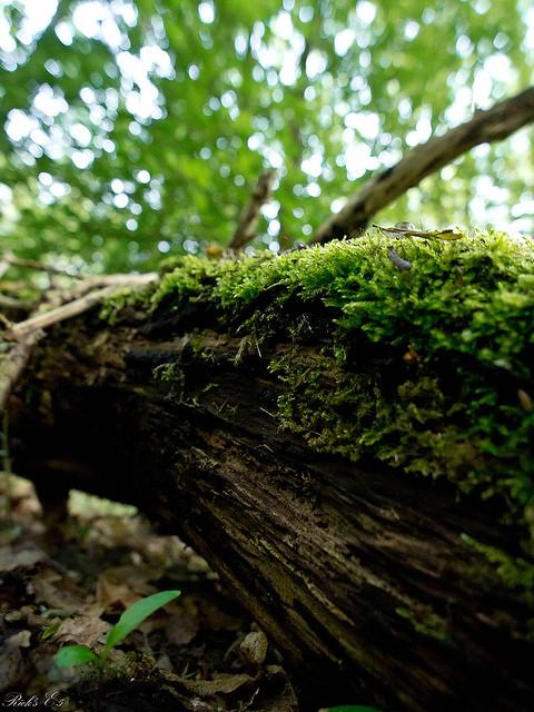 in het bos 2