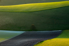 Field Geometry (commended in Take-a-View LPOTY 2011) (S l a w e k) Tags: uk morning england tree green texture nature field grass rural landscape sussex countryside nationalpark spring britain country hills soil telephoto fields lone undulation wilmington solitary rolling southdowns bucolic compressed undulating ploughed polegate longlens naturepoetry