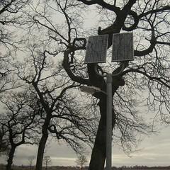 (jili'm **) Tags: trees square squared friesland bsquare squarish