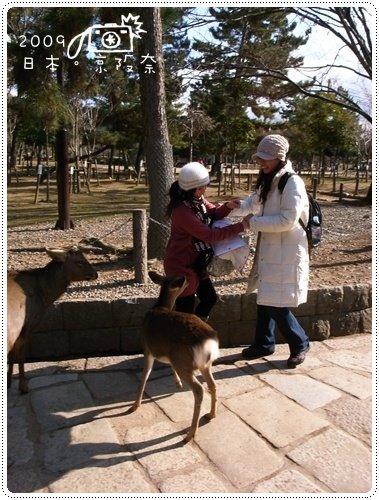 奈良的鹿 (11)