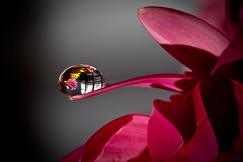 A Drop of Flowers II